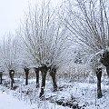 Poprószylo a na drugi dzien sie roztopilo i tak kilka razy bylo i sie skonczylo :)) #zima 2018 #alicjaszrednicka #przyroda #natura