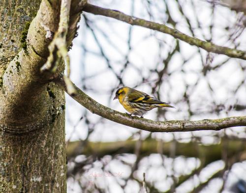 #ptaki #natura #alicja #szrednicka