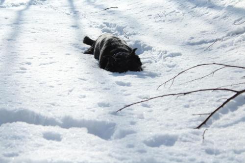 Chować głowę w... śnieg