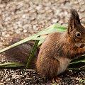 Wewiórki dzis na ziemi:) #Wewiórki #zwierzeta #ogrody #zima #alicjaszrednicka