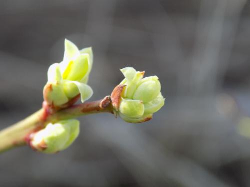 Wiosna rozkwita...