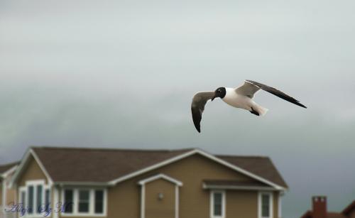 mewa2- #mewy #ptaki #plaze #atlantyk