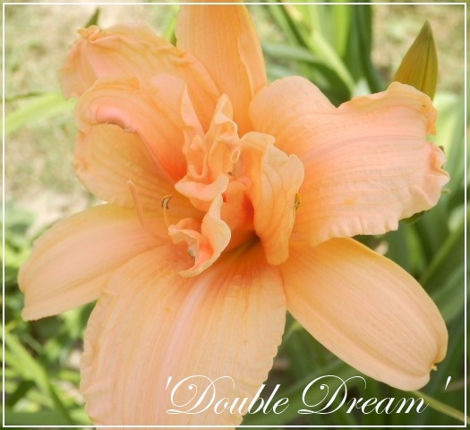 hem 'double dream'
