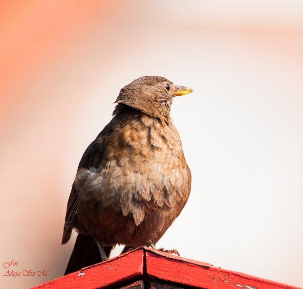 #ptaki #ogrod #natura #lato