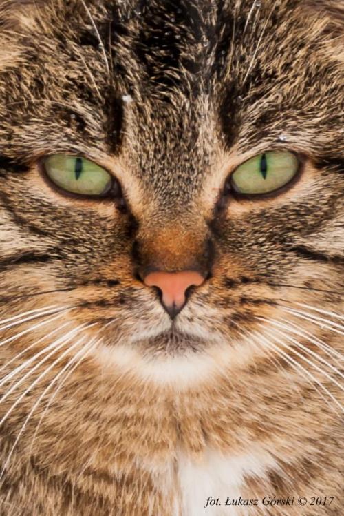 W cztery oczy ... #kot