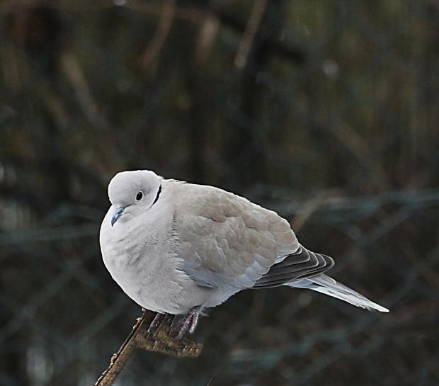 Ptaki #Ptaki #zima