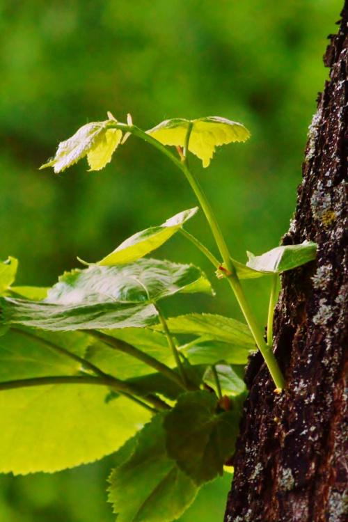 rodzi się wiosenna zieleń