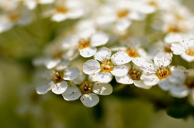 pierwsze kwiaty przekwitaja ale drzew kwiaty nas witaja- :))