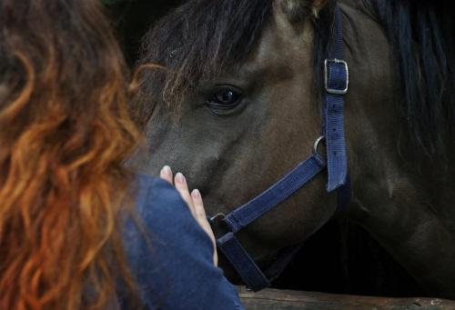Z miłości do koni...