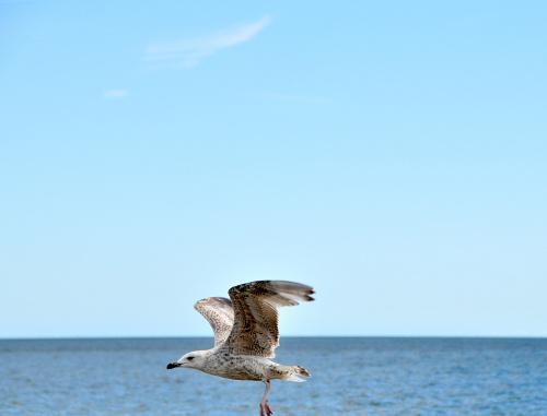przepiekne ptaki,przepiekny krajobraz ...tak pieknie jest w Sopocie... #ptaki #morze #Polska