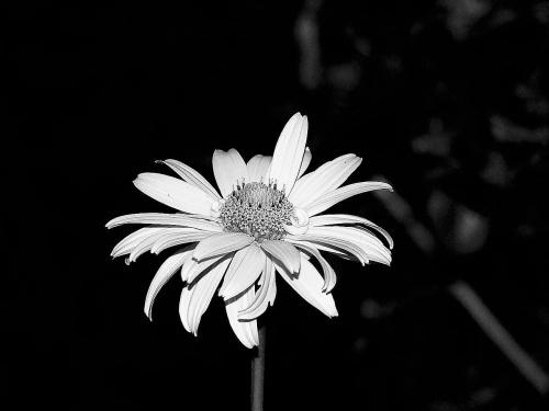Nocą obudzę się, Nocą nabiorę sił, Powędruje do krainy moich marzeń, Nocą Ty przyjdziesz do mnie,Pójdziemy razem i utoniemy w krainie kwiatów i księżyca...