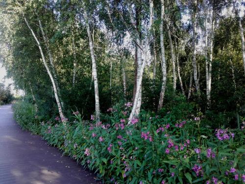 aleja spacerowa w Trzebieży
