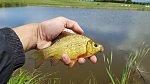 images83.fotosik.pl/766/2b6f5511dd2aecf5m.jpg