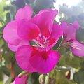 #natura #kwiatek