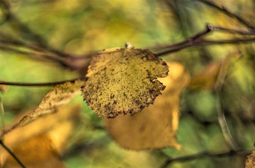 Znaki Jesieni