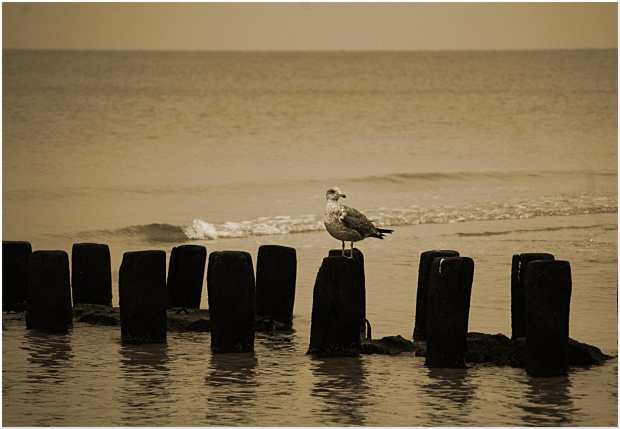 pozdrawiam WSZYSTKICH z kołobrzeskiej plaży :)