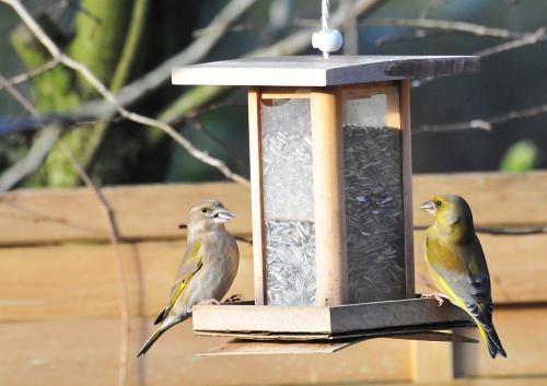 Ptaki,ptaki.... #ptaki #ogrody alicjaszrednicka-mondritzki,zięba, dzwoniec,greenfinch