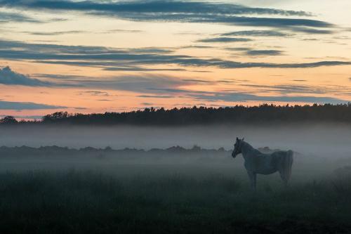 Wieczorne mgiełki