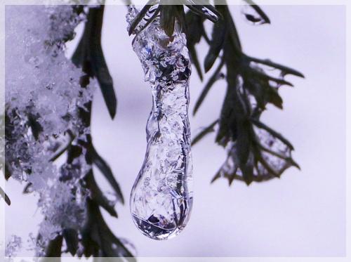 zimowe klejnoty