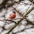 Gile jeden z wielu ptakow na moim orzechowym drzewie:) #ptaki #moj #ogrod #natura #alicja szrednicka-mondritzki