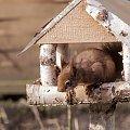 wiewiórki podjadaja nasionka ptakom ,pewnie mysla, ze ja nie widze;)) #natura #zwierzeta #wiewiórki